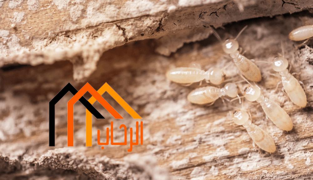 Photo of مكافحة النمل الابيض في المنزل
