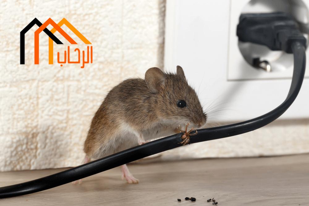 Photo of طرق مكافحة الفئران المنزلية