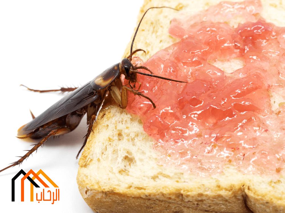 طرق القضاء على الحشرات الزاحفة