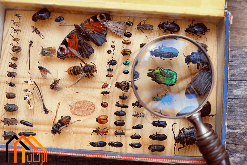 مكافحة الحشرات فى المنزل