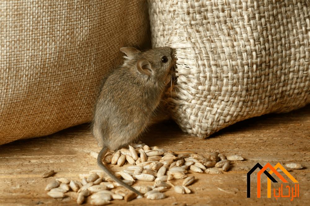 Photo of التخلص من الفئران نهائيا
