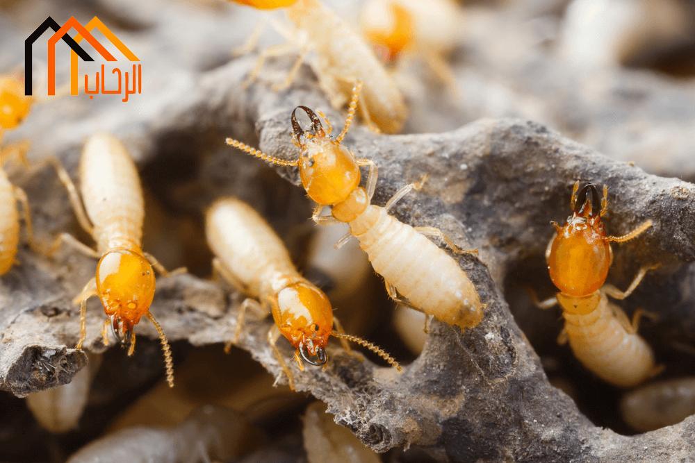 Photo of كيفية مكافحة النمل الابيض