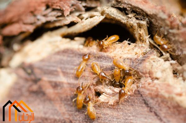 كيفية مكافحة النمل الابيض