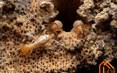 طرق طرد النمل الابيض من المنزل