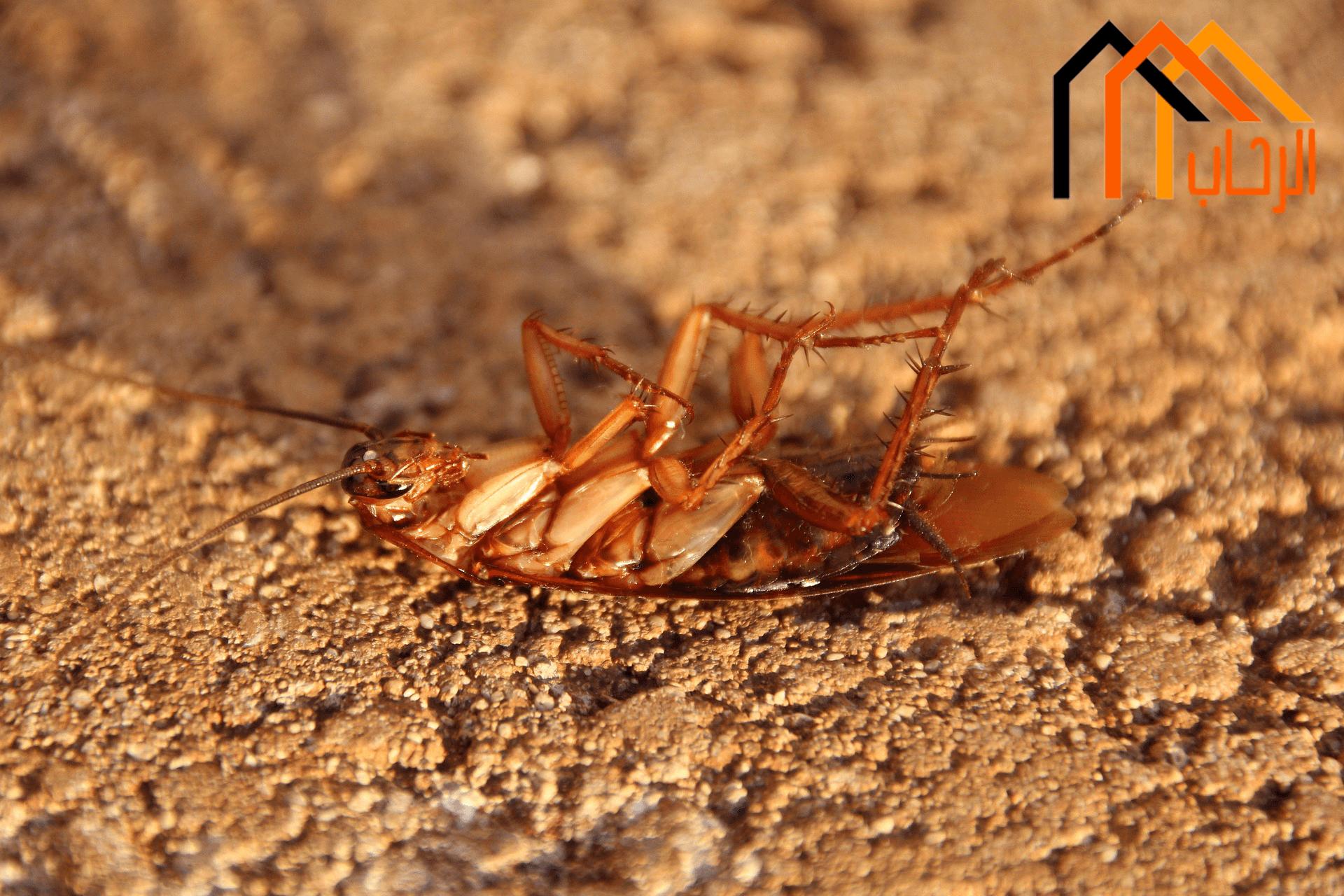 كيفية تنظيف المنزل من الحشرات