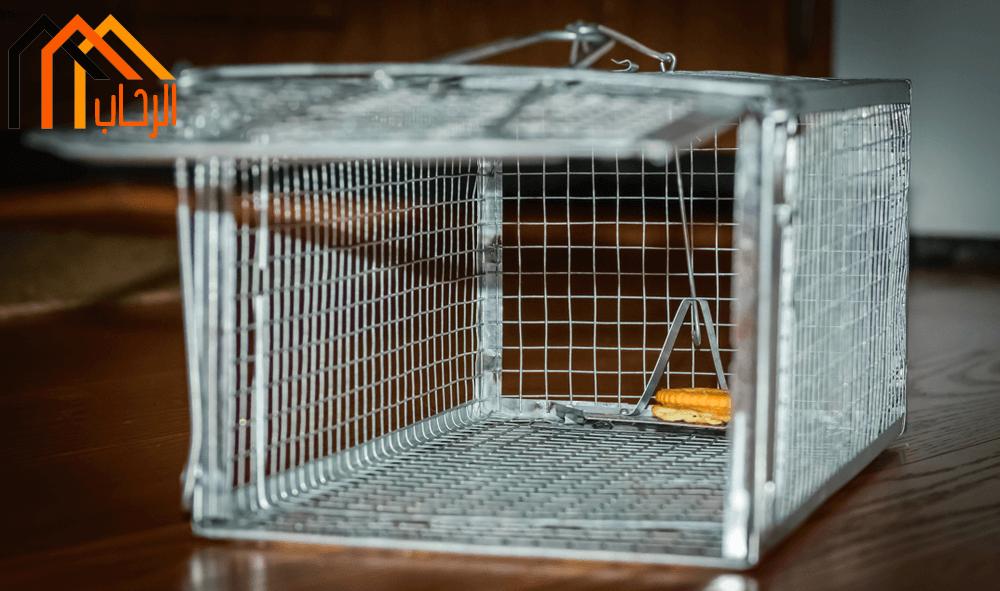 افضل طرق القضاء على الفئران