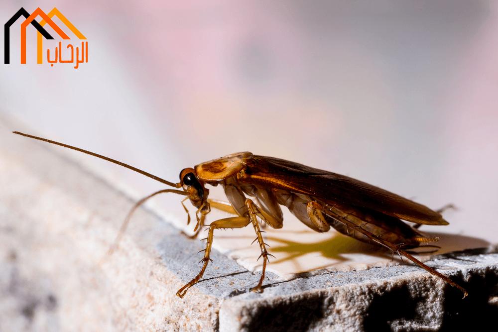طرق طبيعية لمكافحة الصراصير