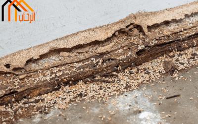 طرق حماية المنزل من النمل الابيض