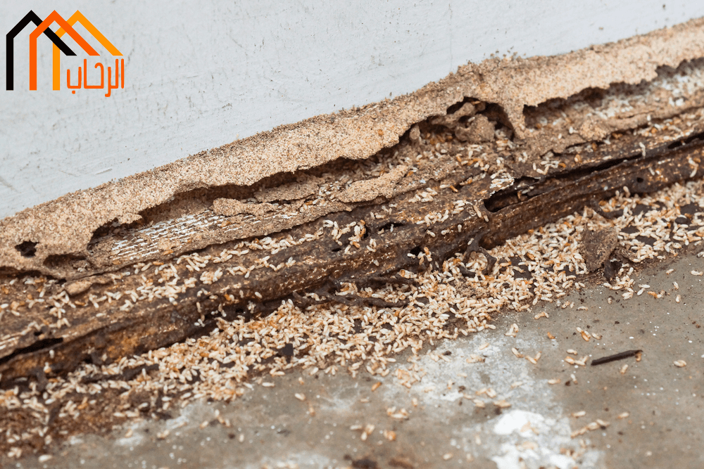 Photo of طرق حماية المنزل من النمل الابيض