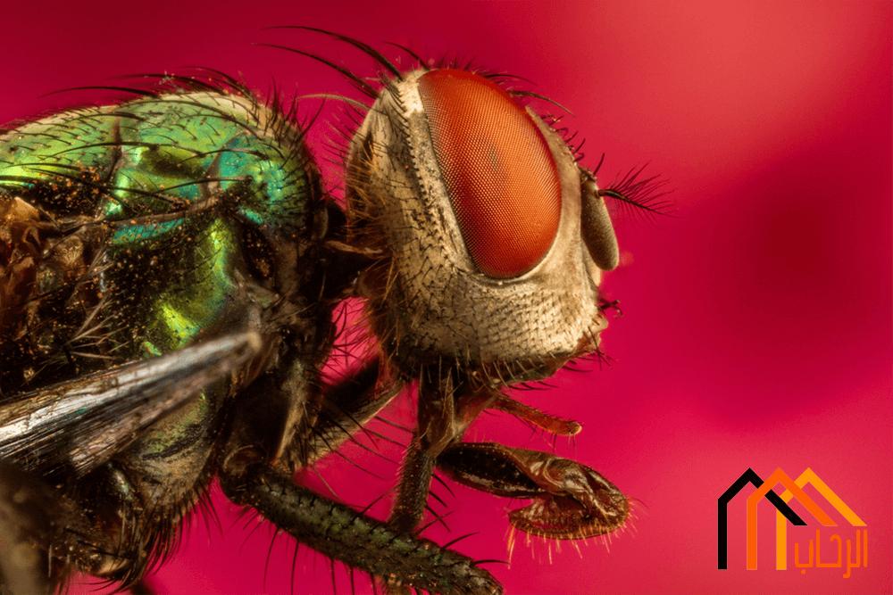 كيفية القضاء على الحشرات الضارة