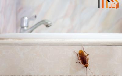 كيف يتم مكافحة الصراصير