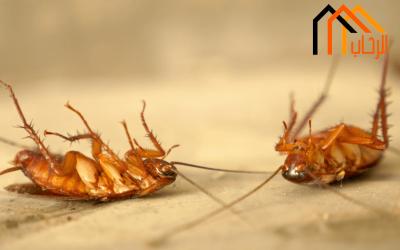 كيف اقضى على الحشرات نهائيا