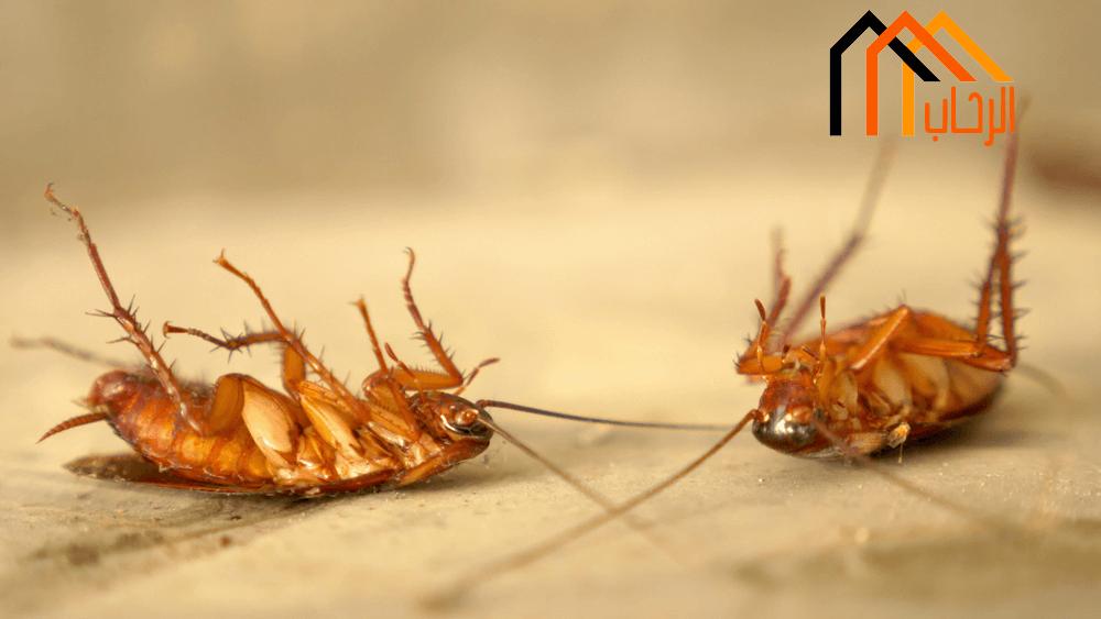 Photo of كيف اقضى على الحشرات نهائيا