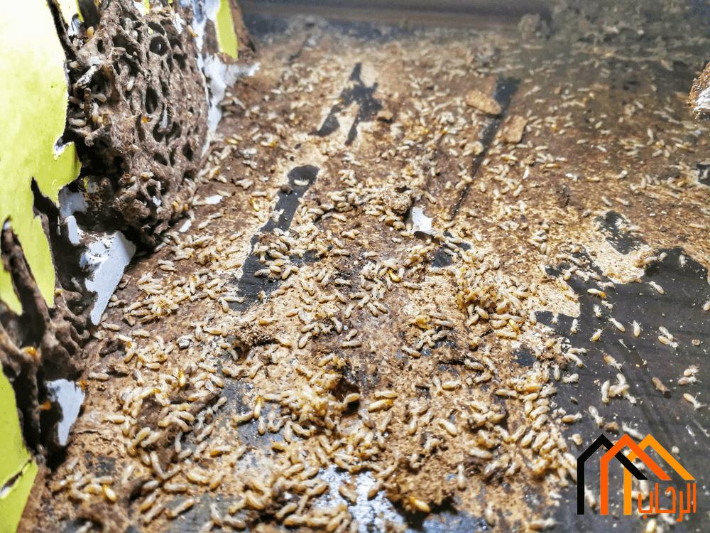 كيفية القضاء على النمل الابيض بالمنازل