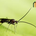كيف تتخلص من الحشرات المزعجة فى منزلك