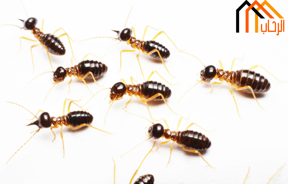 طرق التخلص من الحشرات الضارة