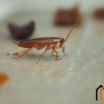 طرق التخلص من اضرار الصراصير