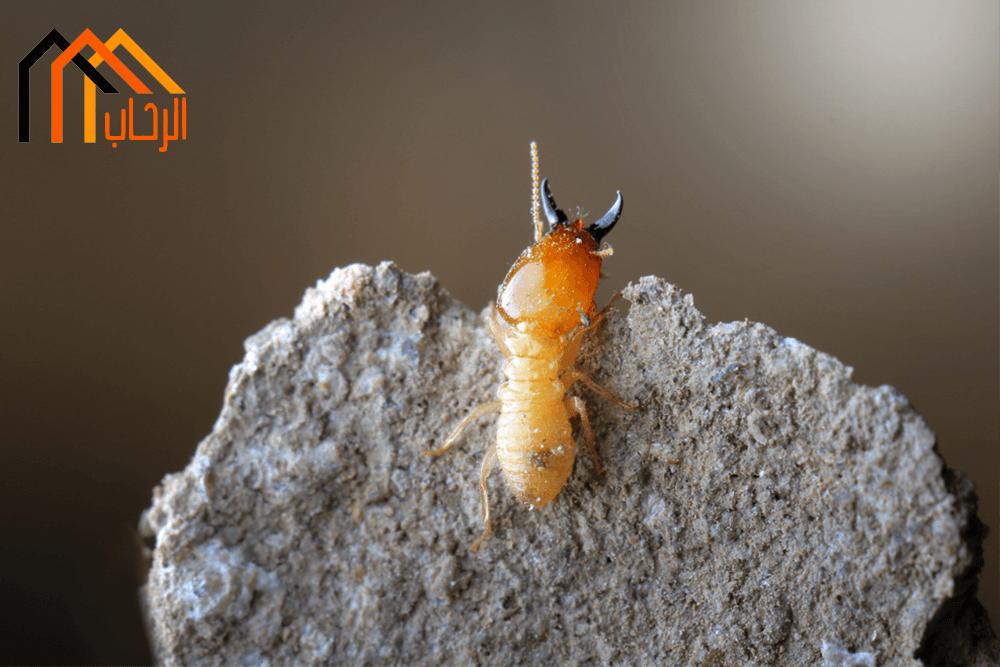 طرق التخلص من النمل الاسود