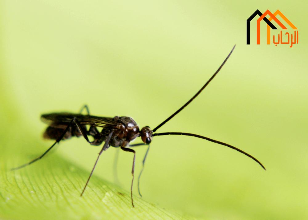 طرق القضاء على النمل فى المنزل