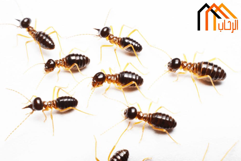 Photo of طرق القضاء على النمل فى المنزل