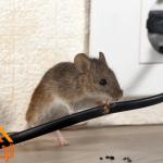 طرق منع الفئران من دخول المنزل