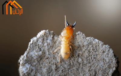 كيف تتخلص من النمل الابيض نهائيا ؟