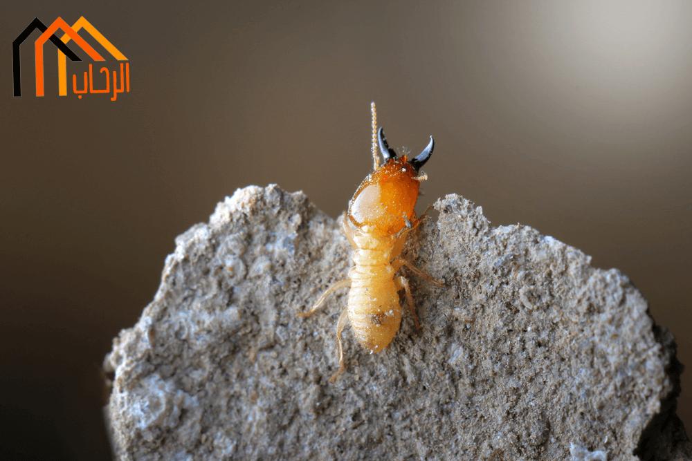 Photo of كيف تتخلص من النمل الابيض نهائيا ؟