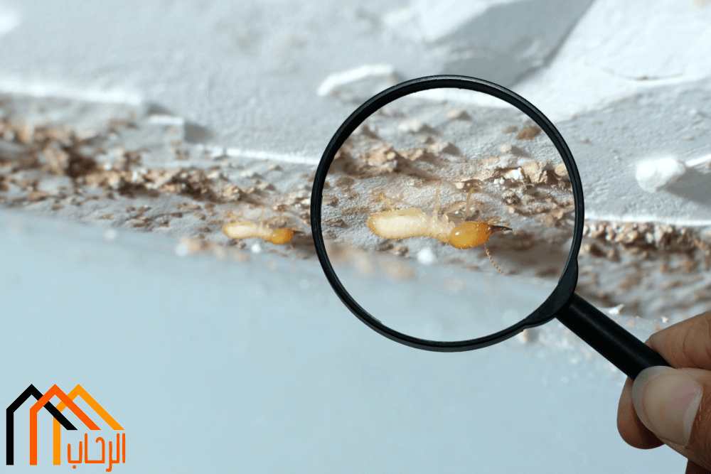 كيف يتم القضاء نهائيا على الحشرات؟