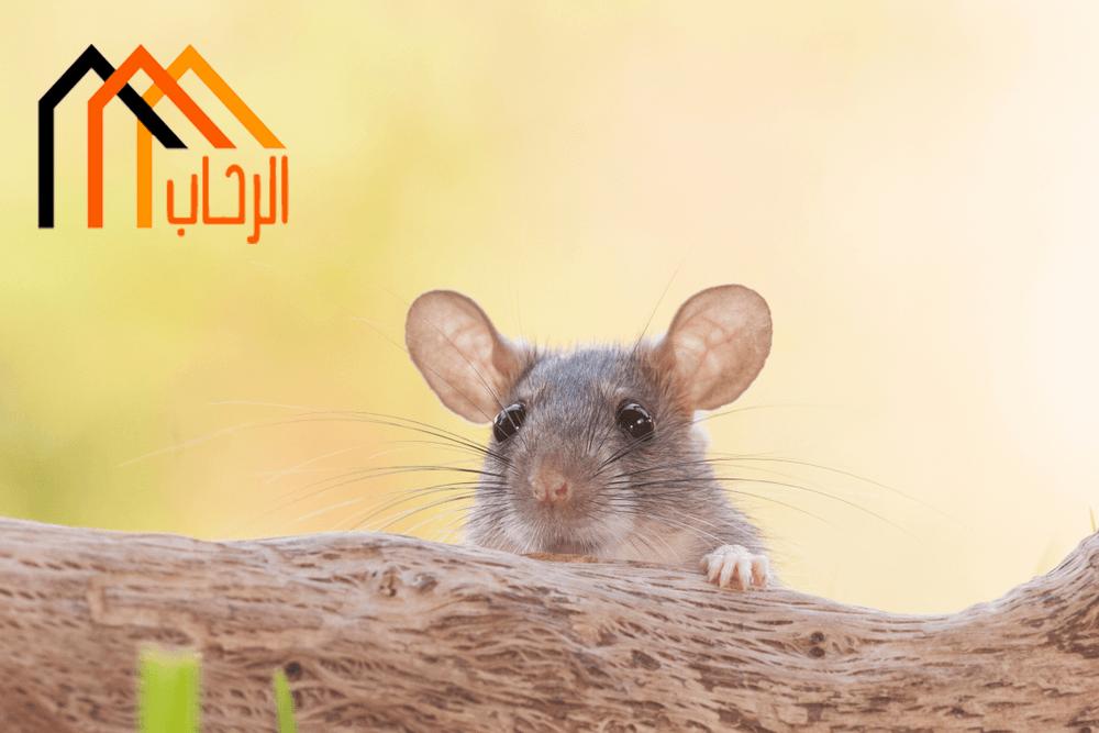 Photo of طرق منع الفئران من الدخول للمنزل