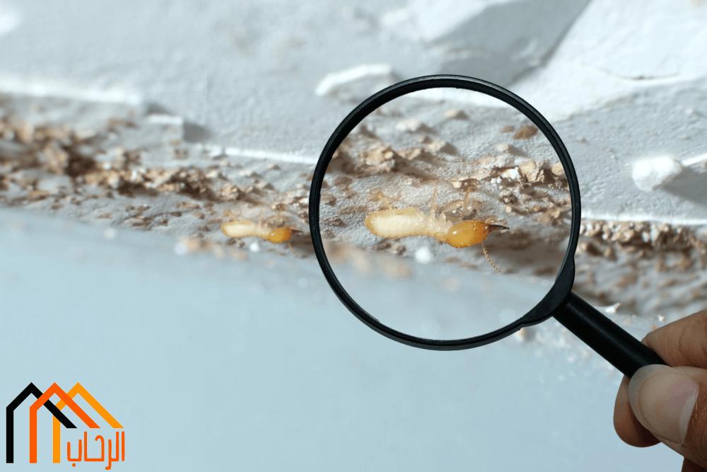 Photo of كيفية القضاء على النمل الأبيض بأمان