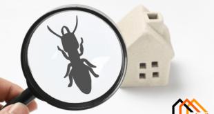 طرق مكافحة الحشرات والآفات دون استخدام المواد الكيميائية